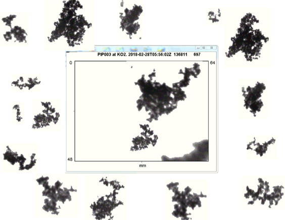 Fig3bottom_PIP_snowflakes